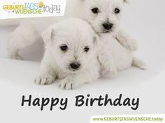 Tierische Geburtstagswünsche