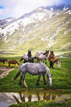 Wild Horses ~ Gran Sasso, Italy..