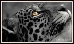 Eyes on Earth Day! Awesome nature photos and blog! Bethany Augliere- Science, Nature, Adventure, Photography