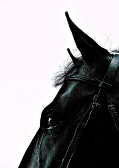 Black horse by stewfrue All The Pretty Horses, Beautiful Horses, Animals Beautiful, Beautiful Eyes, Black Horses, Dark Horse, Equine Photography, White Photography, Horse Pictures