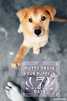 Potty training is time consuming and can take forever...right? WRONG! In just 7 days your pup will doing her business outside! Learn how to get your sanity back in just one week!