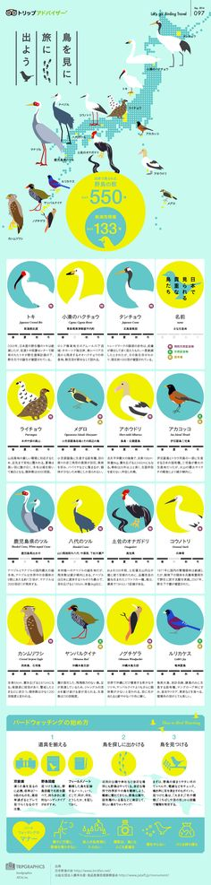 This is an infographic about birds that is uniform with circle diagrams for different types of birds, and it is pleasing to the eye with such uniformity and a playful color palette.