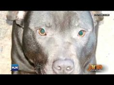 Thousands mourn execution of Belfast dog Lennox after years of efforts to save him fail