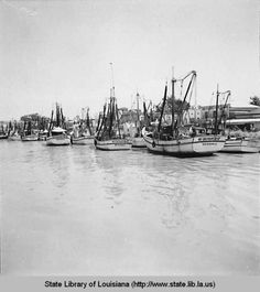 Morgan City, Louisiana - Shrimp Fleet 1945 Morgan City, Louisiana History, Old Sailing Ships, Vintage Pictures, Vintage Photography, Shrimp, Boat, Dinghy, Boats