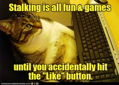 - World's largest collection of cat memes and other animals Funny Animals With Captions, Funny Captions, Funny Cat Memes, Funny Cat Videos, Funny Animal Pictures, Funny Cats, Funniest Animals, Crazy Cat Lady, Crazy Cats