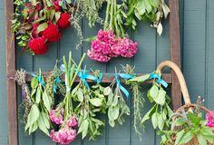 how to dry flowers & herbs | how to dry herbs pin it tweet login to save print email to a friend