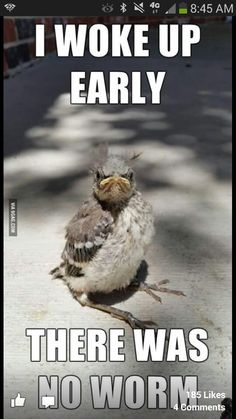 Funny pictures Good morning - The early bird catches the worm - Tier Witze - Lustige Tiere - humor Animal Jokes, Funny Animal Memes, Cute Funny Animals, Funny Animal Pictures, Funny Memes, Animal Sayings, Funniest Memes, Bird Pictures, Bird Sayings