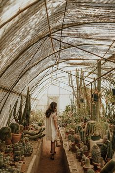 I actually don't think it's possible for there to be a more dreamy vision of my ideal future than this greenhouse filled with so many potted cactus. Getting to walk into a greenhouse like this on a cold winter day is a dream. My love for house plants and cactus grows!