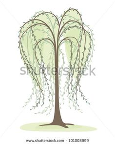deciduous tree on a white background, willow