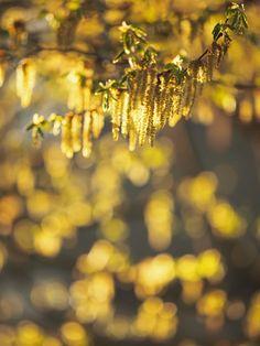 En algún lugar, en el cual nunca estuvimos, ya estaban el muro, la calle, el jardín. Y la sorpresa sigue a la nostalgia. Parece que nos acordamos y queremos volver para allá, para ese lugar donde las cosas son siempre así, bañadas por una luz antiquíssima y al mismo tiempo acabada de nacer. Nosotros también somos de allá. (Octavio Paz, El arco y la lira)