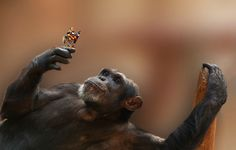 ape and butterfly