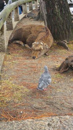 By deer park