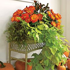 Versatile Fall Container   This vintage wicker planter, snagged at a flea market, overflows with mums and foliage. For another amazing look, try these plants in a window box.