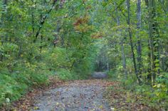 New Glarus Woods State Park, a Wisconsin park located nearby Madison, Monroe and Oregon