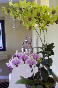 "Orchids 101: Get Started Growing Orchids at Home: ""These exotic aristocrats of the flower world are making themselves comfortable in almost any home"""
