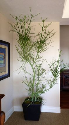 14 Best Indoor Succulents To Grow At Home | Balcony Garden Web