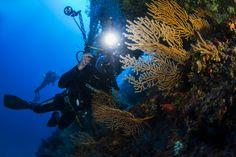 Diving Club ecosostenibile Campania:Capri Mare