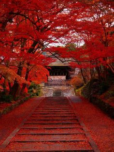 Red, my // Kyoto, Japon 毘沙門堂 Beautiful World, Beautiful Places, Japan Travel, Belle Photo, Beautiful Landscapes, Wonders Of The World, Nature Photography, Scenery, Around The Worlds