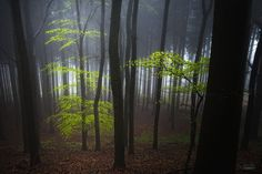 Forest islands of light by JanekSedlar Tree Photography, Tree Leaves, Natural Beauty, Nature, Photoshop, Islands, Amazing, Facebook Website, Trees