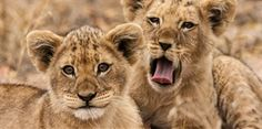 14 of the World's Cutest Baby Animals Ever