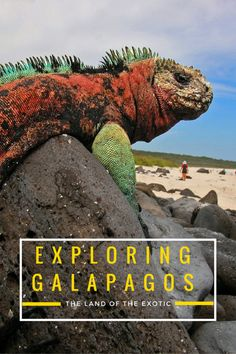 Galapagos on a budget