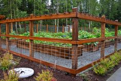 The 25 Best Wire Fence Panels Ideas On Pinterest Hog