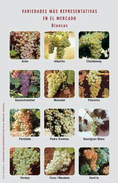 Uvas de nuestros vinos blancos