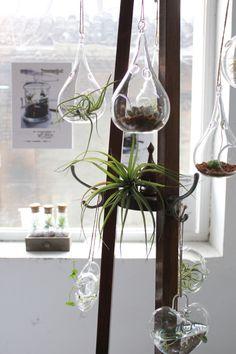 Indoor glass orb terrariums.