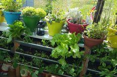 backoffice&more - Projekte - Nahversorgung Region Elsbeere Wienerwald - vertical gardening Gardening, Plants, Gutter Garden, Projects, Lawn And Garden, Plant, Planets, Horticulture