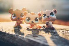 littlest pet shop bears