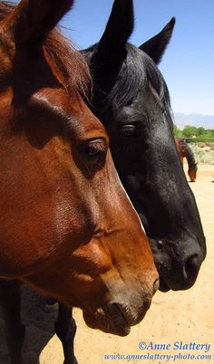 Three Horses, Albuquerque, New Mexico. IMG_D_17949 by The Bright Edge - Photography by Anne Slattery, via Flickr