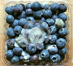 Rotten Food : Mouldy Blueberry Fruit - Download From Over 29 Million High Quality Stock Photos, Images, Vectors. Sign up for FREE today. Image: 29049668