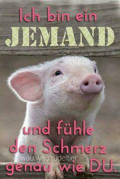Ich bin ein JEMAND und fühle genau wie DU den SCHMERZ. Start #Vegan © wau.wau.rudeltier