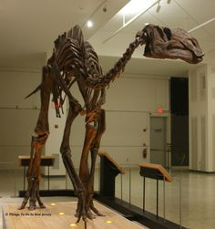 Hadrosaurus foulki - New Jersey State Museum | Things to Do In New Jersey
