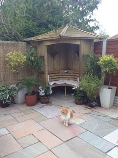 Corner arbour unpainted and George the Persian cat !!