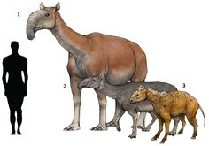"Prehistoric taxonomie   1.Macrauchenia patachonica (""long llama"") 1838..."
