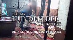 Tragt Ihr auch Hundeleder und seit persöhnlich mitverantwortlich ??? Doglether PETA Deutschland e.V.