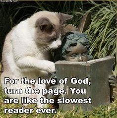 Turn the page, right meow.