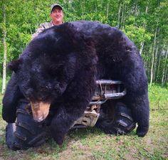 Black Bear Bear Hunting, Hunting Tips, Bear Attack, Deer Pictures, Animal Cruelty, Nature Animals, Black Bear, Stupid, Ranger