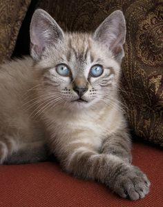 ✯ Little Miss Blue Eyes