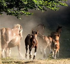 Horses by j.alber on Flickr.