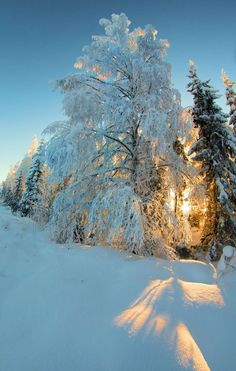 Amazing Winter Photography for Inspiration - 1