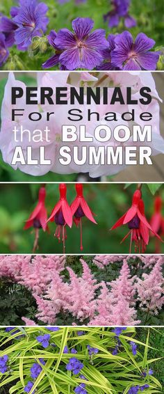 Gardening Tips Here are our top picks for shade plants and choosing perennials for shade that bloom all summer long! - Here are our top picks for shade plants and choosing perennials for shade that bloom all summer long! Shade Garden Plants, Garden Shrubs, Lawn And Garden, Garden Landscaping, Shaded Garden, Landscaping Ideas, Summer Plants, Shade Landscaping, Flowering Plants For Shade
