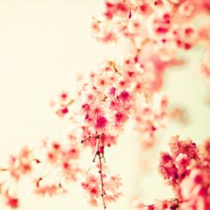 Cherry blossom photography spring decor large print by Andrekart