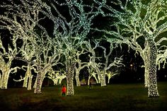Texas Hill Country  WOW! I love this pic!! You can sort of tell how big these trees are by looking closely to see Alana's two GrandDaughters running around them. Magical scene.... just makes you SMILE!! :-) --CG    (Thanks to Alana Welsch Black for pic in Johnson City, TX)