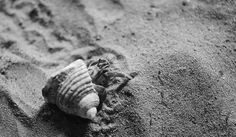 "setoboonhong ( Back and catching up slowly) posted a photo:  A tiny hermit crab scooting away as I approach...on the beaches of Koh Rock Island , Phuket, Thailand...  I remembered the lyrics of this oldie song called "" A place in the Sun "" This is Stevie Wonder's version.  www.youtube.com/watch?v=W8lVPMWLCBQ  Lyrics....  Like a long lonely stream I keep runnin' towards a dream,  movin' on, movin' on.  Like a branch on a tree I keep reachin' to be free,  movin' on, movin' on.  'Cause there's…"