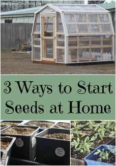 Create better variety and save money with these 3 ways to start seeds at home.
