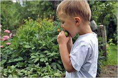 Interesse für die Umwelt wecken, Zusammenhänge erkennen: KITA21 fördert das Umweltbewusstsein von Vorschul-Kindern (Foto von: imago/Redeleit-L.)