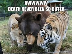 Deathly hug...