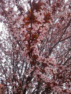 Tavaszi viràgzàs